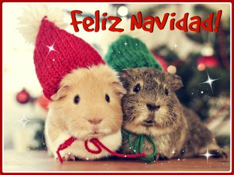 imagenes feliz navidad con perros preciosos wallpapers de animales navide 241 os todo mascotas