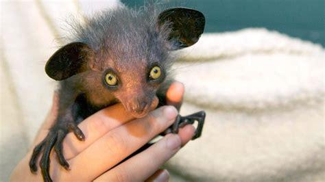 imagenes de animales raros en el mundo los animales m 225 s raros del mundo