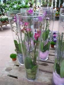 offrir une orchid 233 e ou une plante fleurie en vase le
