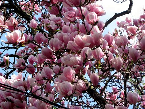 magnolia trees bikes books a little music