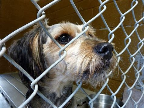 animal shelter puppies ask your local shelter to join no kill mondays pawsitively pets