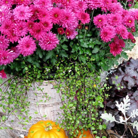 fall container garden ideas ideas for fall container gardens