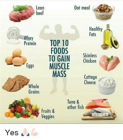 healthy fats and proteins lean oat meal beef healthy fats whey top 10 protein foods