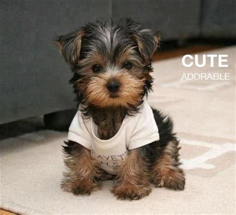 adorable small puppies 7 adorably tiny dogs adorable