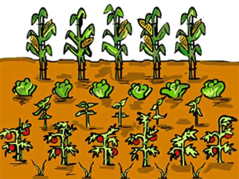 clipart garden why has bean counting fallen from fashion