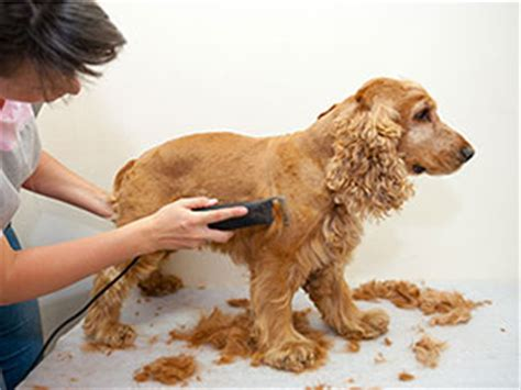how to get a dog to use the bathroom outside how to use dog clippers cesar s way