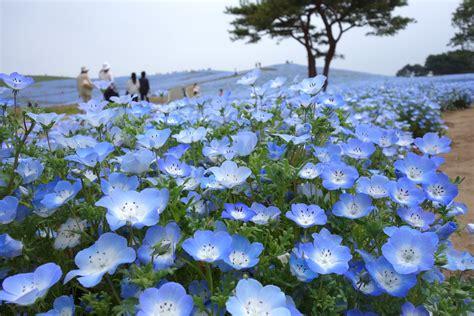 evacomics blog hitachi seaside park and ashikaga flower park