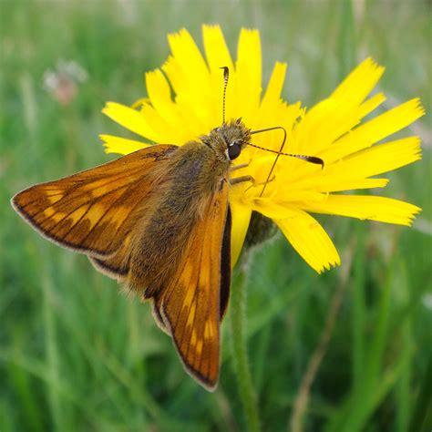 giardino farfalle farfalle in visita romanatura