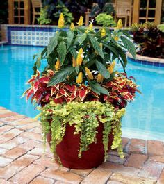 Landscaping On Pinterest Palm Beach County Florida Container Vegetable Gardening Florida