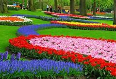 gambar-pemandangan-taman-bunga-foto-bunga-tulip-flower-garden ...