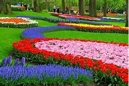 Beautiful Flower Garden Tulips