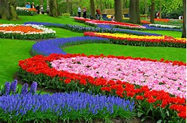 Beautiful Flower Garden Holland