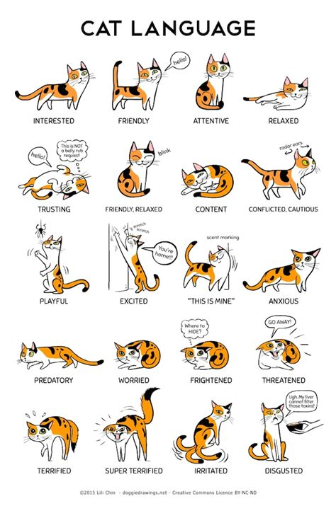 puppy language language in cats and dogs