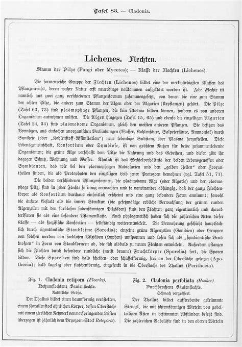 Ernst Haeckel: Kunstformen der Natur, Tafel 83