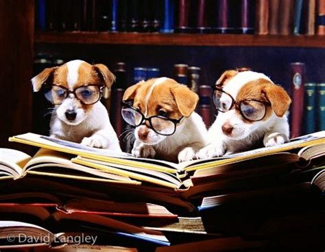 pam the puppy learns to jump early reading books books according to this we can t read