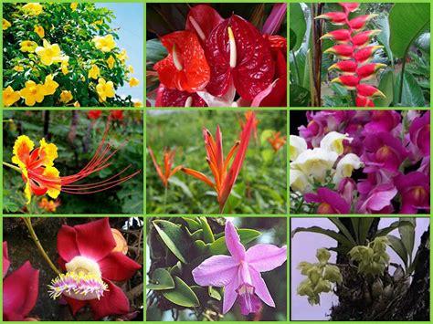 Amazonas Regenwald Pflanzen by Flora Des Amazonas Regenwald Anca24