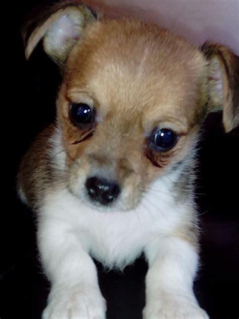 petsmart dogs for sale jackawawa puppies pets for sale pets for sale