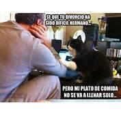 Por Eso Cuando Veo Fotos De Gatos Chistosos Y Graciosos Para Facebook