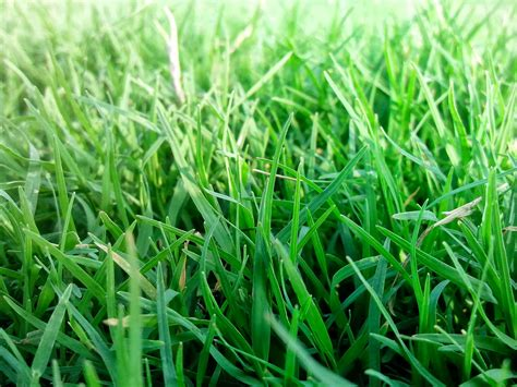 file beauty of grass jpg
