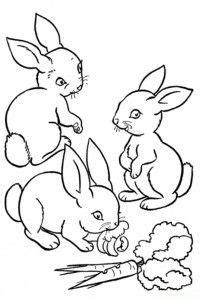 ausmalbilder kaninchen malvorlagen tiere ausmalbilder