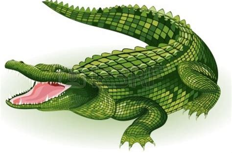 crocodile clipart vector illustration of a crocodile on white background