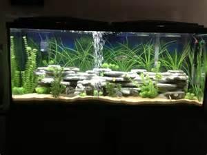 beginner cichlids for 55 gallon aquarium? picture 003