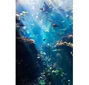 Ocean Life Photo On Sunsurfer