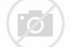 Bird of Paradise Species