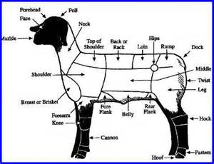 Sheep body parts diagram on blank goat parts worksheet