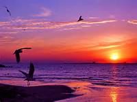 Sunset Sea Wallpaper 1600x1200 Animals Photography