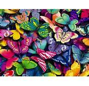 Butterflies  Yorkshire Rose Wallpaper 15990936 Fanpop