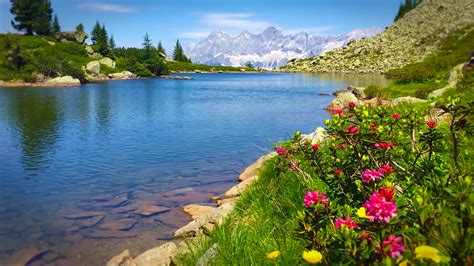 Fish Tank Bed Vindora Premium Alpine Ambient Amp Wellness Wallpapers