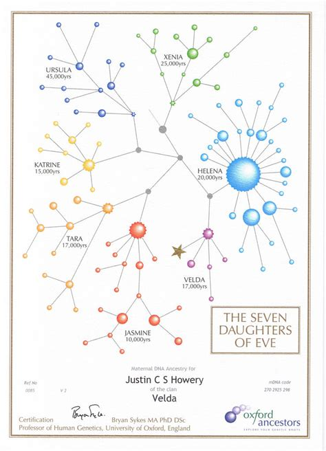 the seven daughters of the science that reveals our genetic ancestry books the seven daughters of