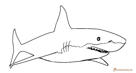 shark teeth coloring page great white shark coloring pages coloring pages designs