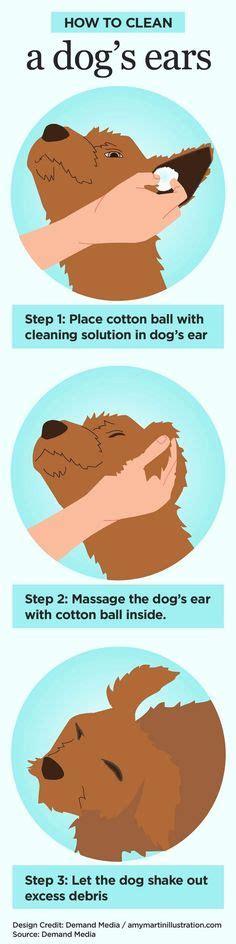 golden retriever ear infection home remedy golden retriever ear infections home remedy breeds picture