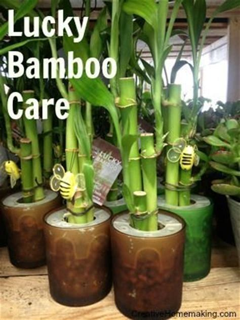 lotus bamboo care 1000 images about creative homemaking on