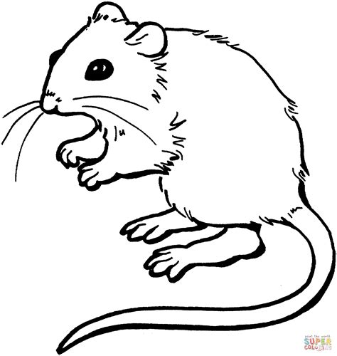 coloring page of a mouse mouse coloring page free printable coloring pages