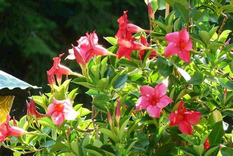 piante grasse da terrazzo piante resistenti al sole piante da terrazzo piante