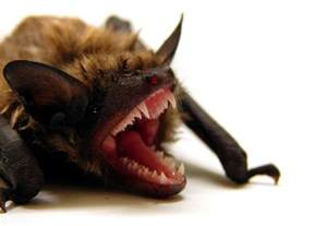 How to get rid of bats in your attic the ultimate repellent