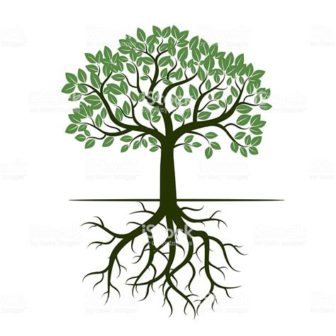Green Tree And Roots Vector Illustration Stock Vector Art More Images Of Arts Culture And Royalty Free Family Tree Clip Vector Images Illustrations Istock