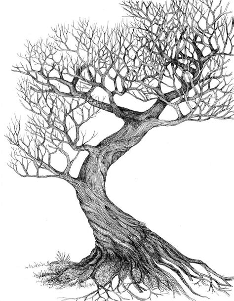 A Sketches Of Trees by Tree Drawing 5 Tree Drawings