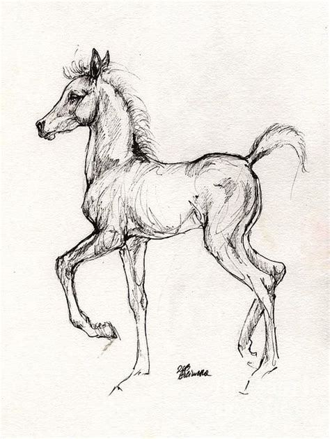 Sketches Horses by Arabian Foal Drawing 31 07 2013 Print By Tarantella