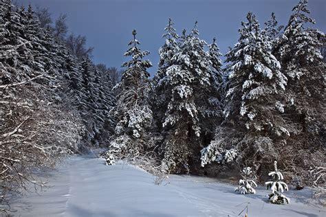 trees snow file wv mountain trail winter snow trees west virginia