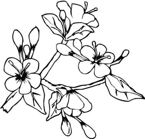 apple blossom coloring pages