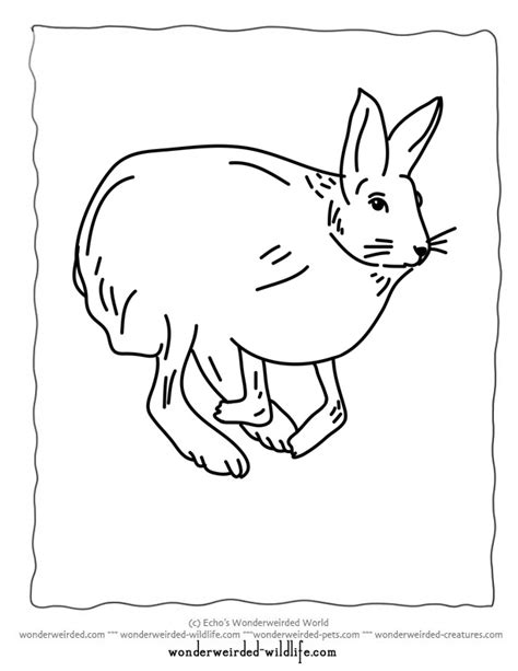 Arctic Hare Coloring Page Az Coloring Pages Arctic Hare Coloring Page