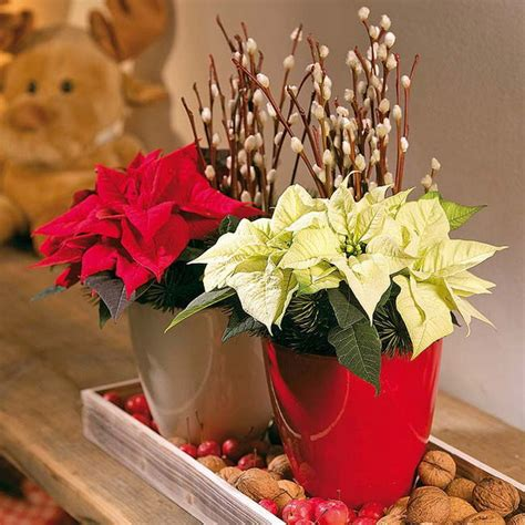 new year flower deco creative indoor plants decors for new year