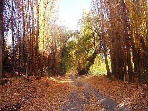 imagenes de otoño en mendoza panoramio photo of oto 241 o en mendoza