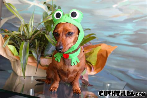 frogs and dogs frog costume for cats and dogs from cushzilla