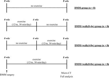experimental design exercise effect of initiation timing of gentle treadmill exercise