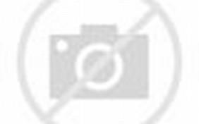 Danbo Converse